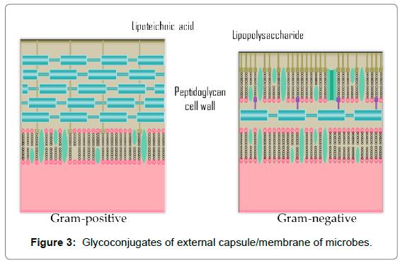 nutrition-food-sciences-membrane-microbes