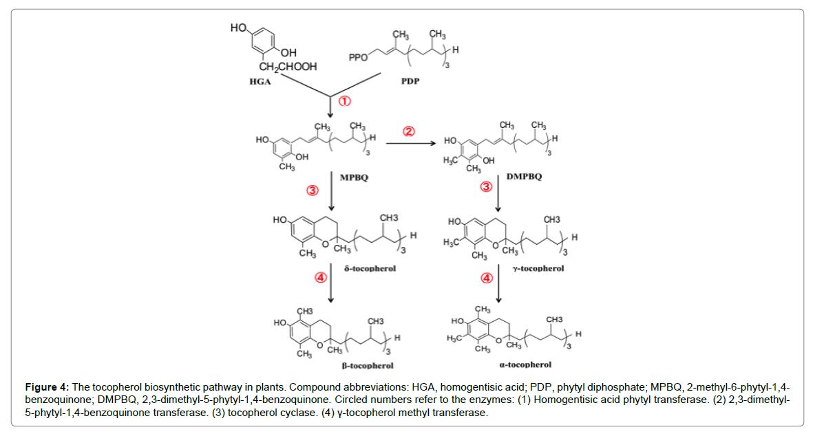 nutrition-food-sciences-phytyl-diphosphate