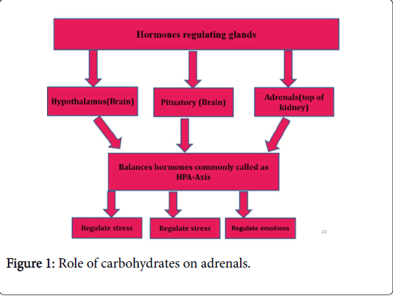 obesity-weight-loss-therapy-Role-carbohydrates