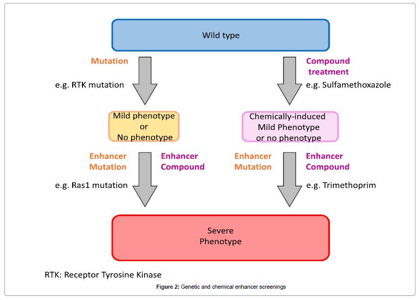 organic-chemistry-enhancer