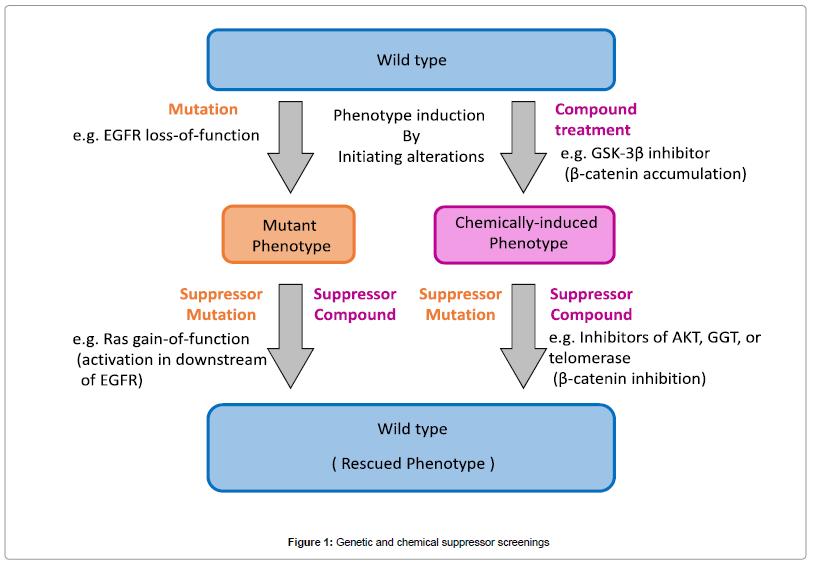 organic-chemistry-genetic