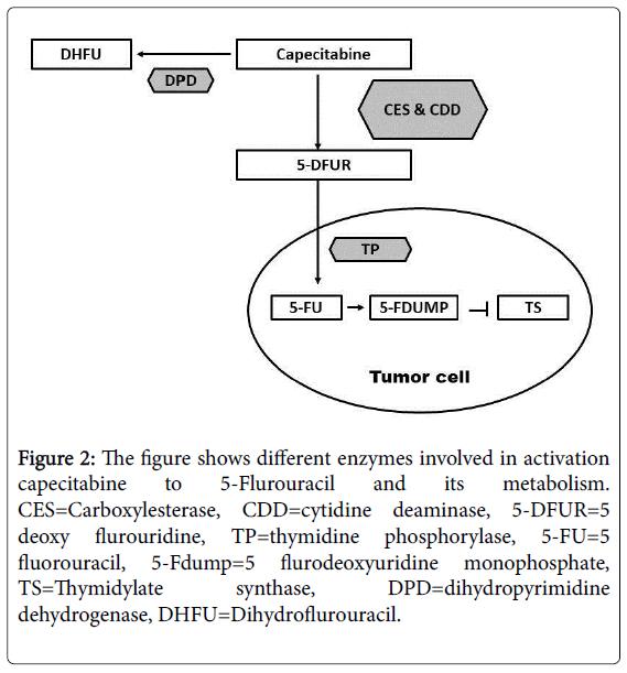 pharmacogenomics-pharmacoproteomics-capecitabine
