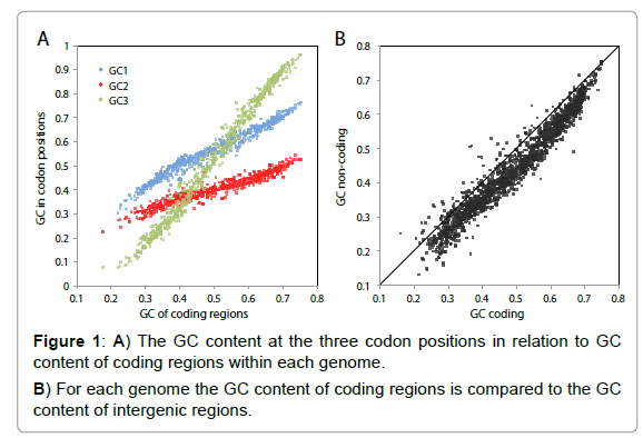 The GC Content of Bacterial Genomes