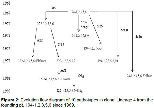 phylogenetics-evolutionary-biology-clonal-Lineage