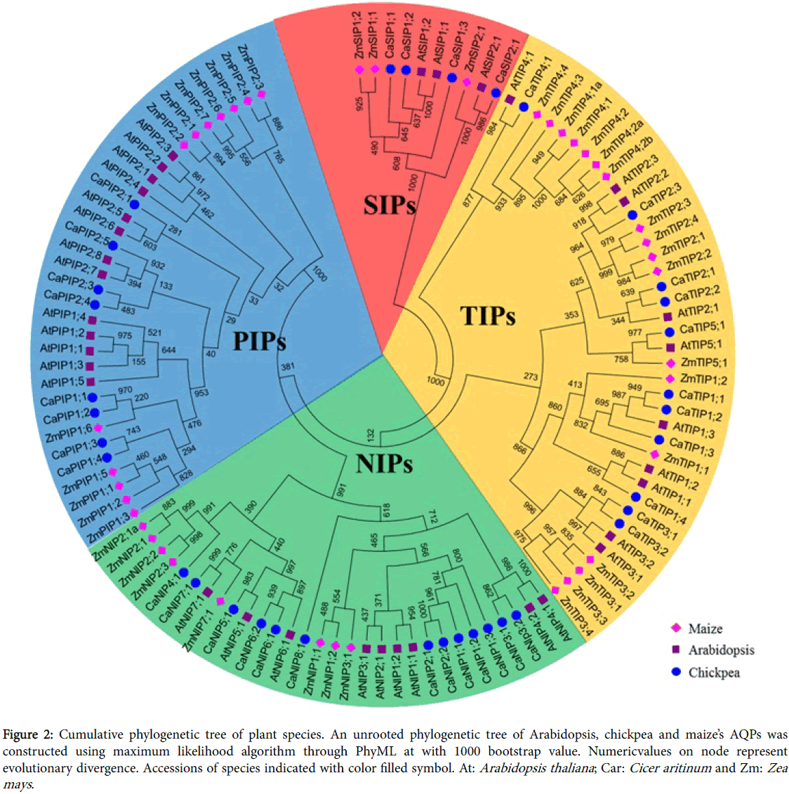 phylogenetics-evolutionary-biology-phylogenetic-tree-Arabidopsis