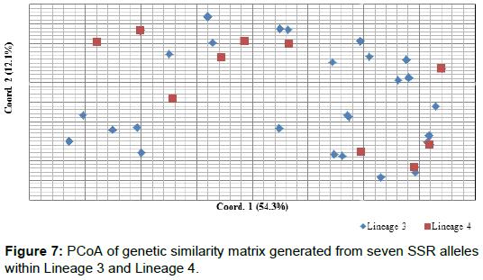 phylogenetics-evolutionary-biology-seven-SSR-alleles