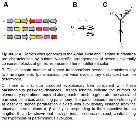 phylogenetics-evolutionary-biology-virus-genomes
