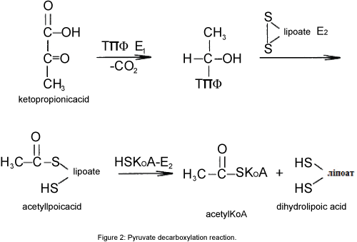 physical-chemistry-biophysics-Pyruvate-decarboxylation-reaction
