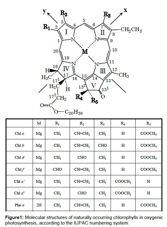 physical-chemistry-biophysics-chlorophylls-oxygenic