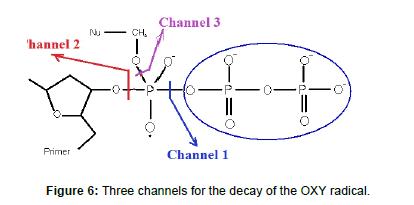 physical-chemistry-biophysics-decay-OXY