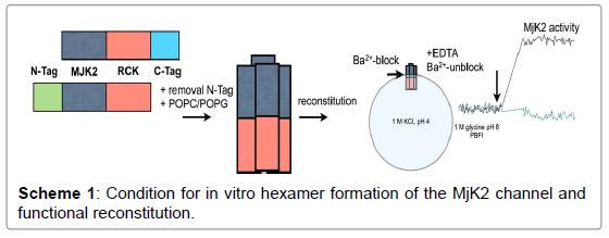physical-chemistry-biophysics-hexamer-formation