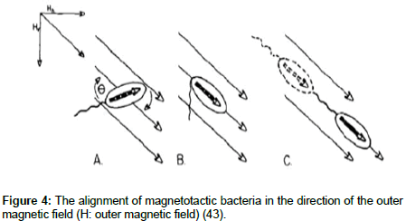physical-chemistry-biophysics-magnetic-field