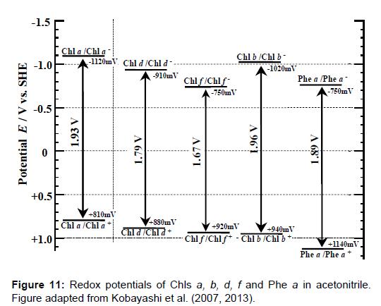 physical-chemistry-biophysics-redox-potentials