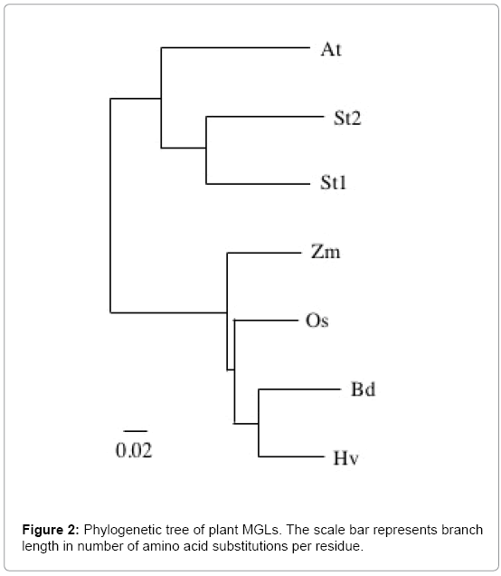 plant-biochemistry-physiology-Phylogenetic-tree