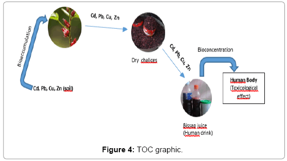 plant-biochemistry-physiology-TOC-graphic