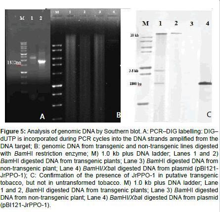 plant-pathology-microbiology-restriction-enzyme