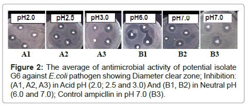 probiotics-health-antimicrobial-activity