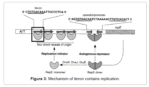 proteomics-bioinformatics-Mechanism-iteron