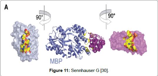 proteomics-bioinformatics-Sennhauser