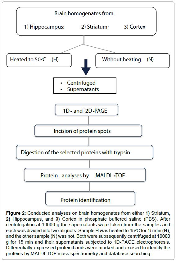 proteomics-bioinformatics-brain-homogenates