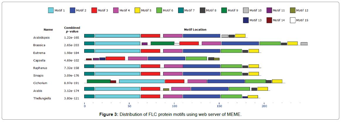 proteomics-bioinformatics-protein-motifs
