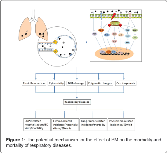 pulmonary-respiratory-medicine-respiratory-diseases