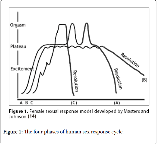 reproductive-system-sexual-disorders-four-phases