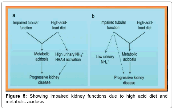 Chronic Kidney Diseases and Nanoparticle Therapeutics