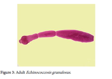 veterinary-science-technology-Echinococcosis